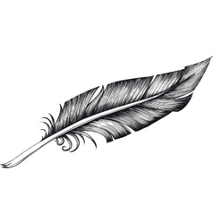 quill pen vector image