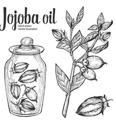 Jojoba Oil Jar vector image
