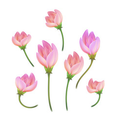 Realistic pink flower cherry lotos set vector