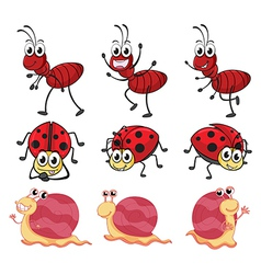 A snail a ladybug and an ant vector image