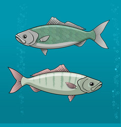 common dace vector image