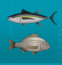 common tune and seabream vector image