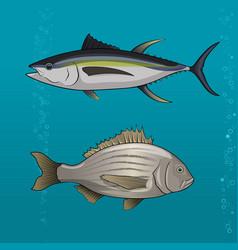 Common tune and seabream vector