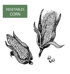 Corn-set of vector image vector image
