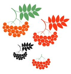 Rowanberry vector image vector image