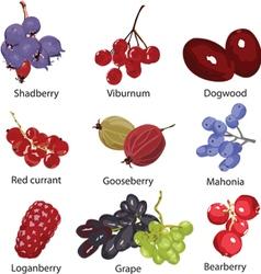 Set of different berries vector