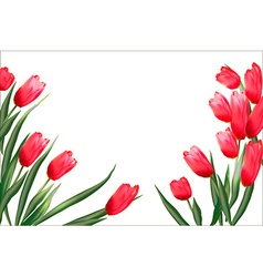 Pattern with blooming red tulips on a white vector