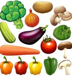 Different kind of fresh vegetables vector