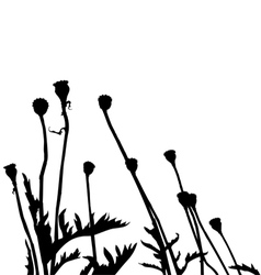 Wild plant and flower silhouettes vector