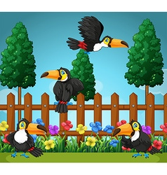 Toucans flying in the garden vector image