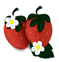 two ripe red strawberries vector image