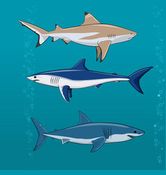 common sharks set vector image