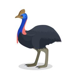 Full length portrait of australian black ostrich vector