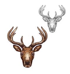 Deer ot reindeer muzzle isolated sketch vector