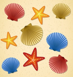 Seashells and starfishes vector