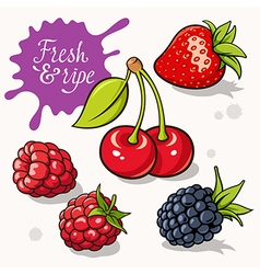Berries set 001 vector image vector image