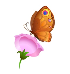 Colorful butterfly on flower vector