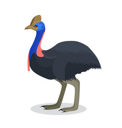 Full length portrait of australian black ostrich vector