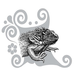 Iguana drawing vector image