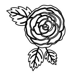Isolated rose flower design vector