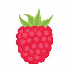 Raspberry on the white background vector
