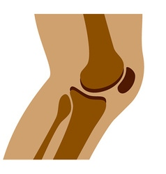Human knee joint side view vector
