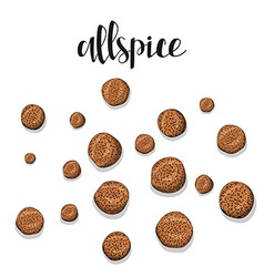 Allspice isolated object sketch spice for food vector