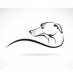 Image of an dog azawakh vector