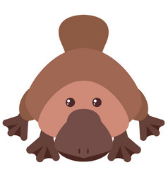 platypus with happy face vector image vector image