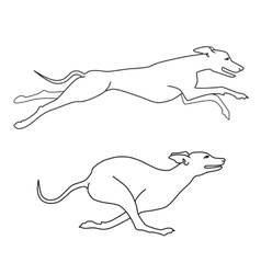Running dogs whippet breed two poses vector