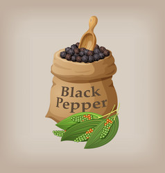 black pepper corn in the bag vector image vector image
