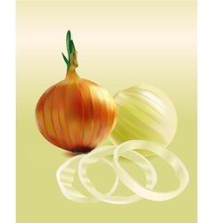 Onions and chopped onion rings vector image vector image