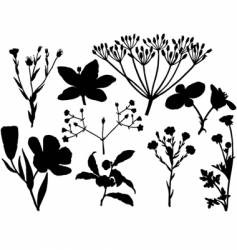 floral silhouettes vector image vector image
