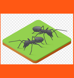 ants picture vector image