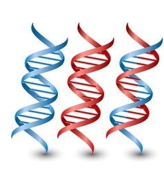 Dna strands on the white background vector