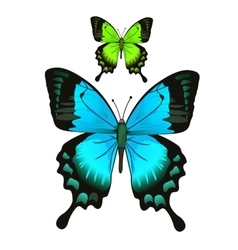 Bright beautiful blue and green butterfly vector image vector image