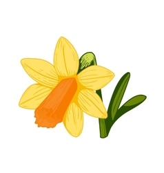 Vintage daffodil flower vector