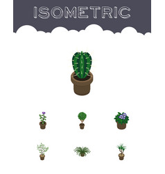 Isometric houseplant set of flower peyote tree vector