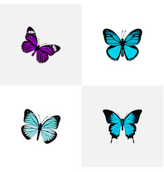 Realistic butterfly sky animal lexias and other vector