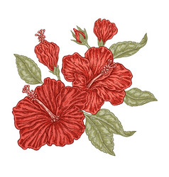 red hibiscus flowers and leaves in vintage style vector image vector image