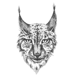 Head of beautiful lynx vector