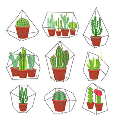Geometric florarium with succulents set vector