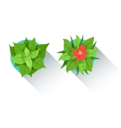 Two decorative table plants office worker desk vector