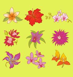 beautiful watercolor flower set vector image