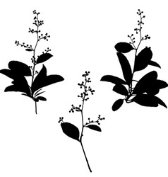 Black silhouettes flower vector