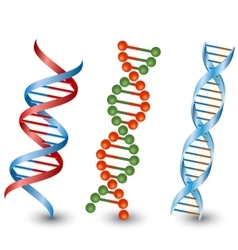 Dna strands on the white background vector image