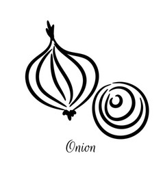 onion hand drawn doodle icon vector image