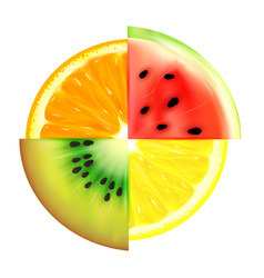 Summer fruit slices in a circle isolated on white vector