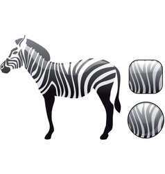 zebra icon vector image vector image
