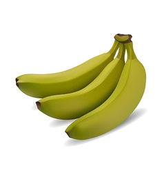 Green banana bundle vector